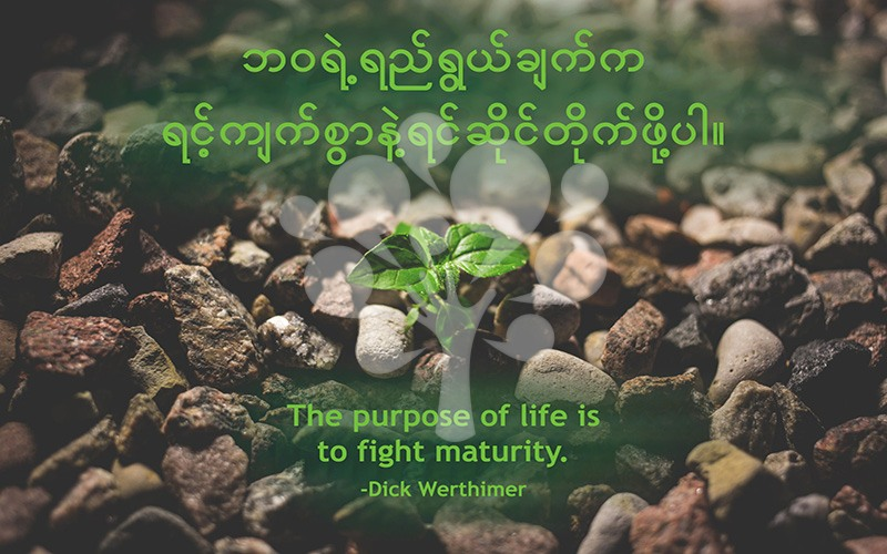 The purpose of life is to fight maturity.